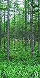 風景写真ポスター  長野県蓼科高原 新緑のカラマツ林03 信州の自然を最高級の素材とこだわりのプリントで再現 (サイズ59.4×37cm)