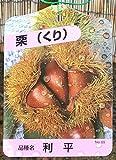 栗 苗木 利平(りへい) 12cmポット苗 くり苗