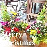 クリスマスのおまかせ寄せ植え(スクエアウッドボックス鉢植え) (ナチュラル)