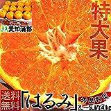 はるみ 蜜柑 2L〜5Lサイズ 約4kg JA愛知蒲郡 大玉セレクト