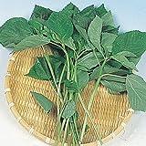 【メール便配送】 国華園 野菜たね 健康野菜 モロヘイヤ 1袋(5ml)【※発送が国華園からの場合のみ正規品です】