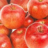 国華園 青森産 お買得 サンふじ 【ご家庭用】 10kg 1箱 リンゴ