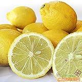 愛媛県産 減農薬 栽培 訳あり レモン 5 kg 【 ワックス / 防腐剤 不使用 】