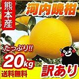 熊本産 訳あり 河内晩柑 20kg[10kg×2箱]【 九州 熊本 みかん ジューシーオレンジ バンカン 柑橘 オレンジ 】