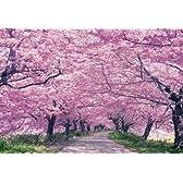 300ピース 権現堂の桜並木 73-160