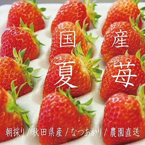 【6月から11月発送】 夏秋いちご 秋田県産なつあかり 600g 2LからSサイズ