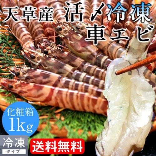 車エビ 活き〆冷凍 車海老 1kg 熊本県天草産 獲れたてを活きたまま急速冷凍 高級ギフト【送料無料】
