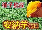 新芋(2017年産) 訳あり 種子島産 安納芋 「安納紅」 サイズ混合 1箱:約5kg入り  安納いも