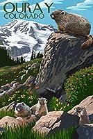 Ouray、コロラド–Marmots 16 x 24 Signed Art Print LANT-80676-709