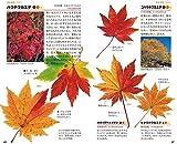 紅葉ハンドブック 画像