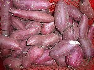 新物紅あずま 家庭用8kg 千葉産・茨城産 べにあずま 芋 サツマイモ さつまいも