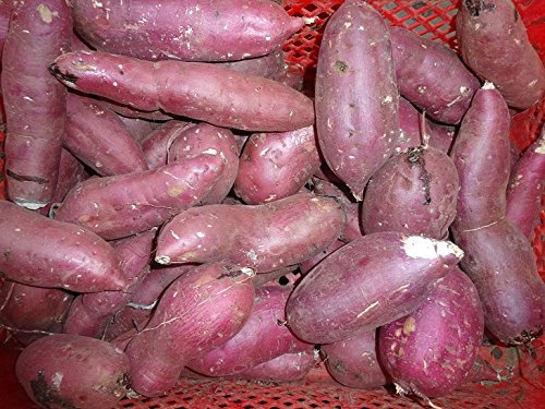 紅あずま 家庭用8kg 千葉産・茨城産 べにあずま 芋 サツ...