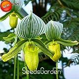 新しい到着!18色の品種アツモリソウ属の種子盆栽種子花パフィオペディルムオーキッドフラワーシード50個/ロット、#のTRQOHU