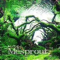 新参者!庭の植物200ピースaバッグLimnophila Sessilifloraモス水生植物種子、水族館草種子盆栽、