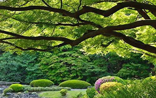 絵画風 壁紙ポスター (はがせるシール式) 新宿御苑 新緑の景色 東京都 森林浴 散歩 気分転換 癒...