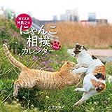 猫写真家 沖昌之のにゃんこ相撲カレンダー2019