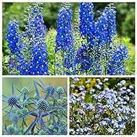 ターコイズブルーの海 - 3花の種の種 - - シーズ