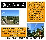 和歌山県産 有田みかん 高糖度でとろける美味しさ 極上の味 のし対応致します (3kg)