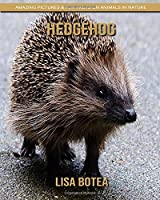 Hedgehog: Amazing Pictures & Fun Facts on Animals in Nature