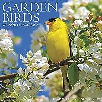 Garden Birds of North America 2019 Calendar