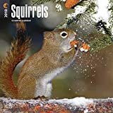 Squirrels 2018 Calendar