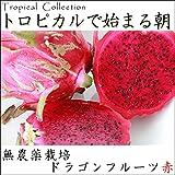 【無農薬栽培】沖縄産 ドラゴンフルーツ(赤)宮古島から産地直送!甘くて美味しい レッドピタヤ 送料無料 (2kg)