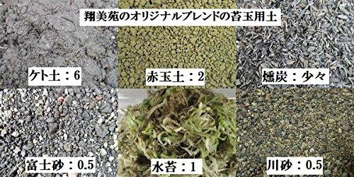 【 翔美苑 】 苔玉 用土 ( ビニール手袋 テグス 付き ) 苔玉用 ブレンド土