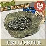 ジオワールド社 化石発掘セット 三葉虫