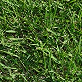 野芝(芝生の種類)