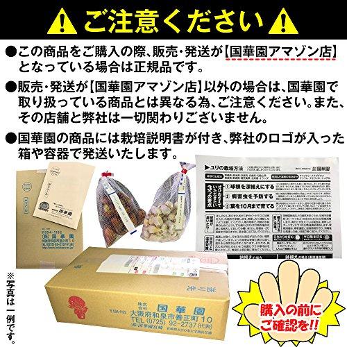 国華園 花たね 赤花除虫菊混合 1袋(150mg)【※発送が国華園からの場合のみ正規品です】
