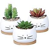 Koolkatkoo 3.2 Inch Cute Cat Ceramic Succulent Planter Pots with Removable Saucer Unique Cactus Planters Porcelain Decorative