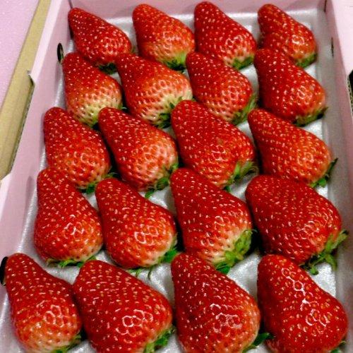 愛媛産 紅ほっぺイチゴ 20〜24個入り化粧箱
