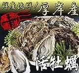 北海道・厚岸産 殻付活牡蠣【LLサイズ】30個 カキナイフ付
