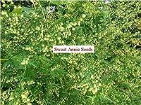 また甘いヨモギ、甘いアニー、甘いsagewort、毎年恒例のヨモギまたは年間よもぎ、andQingハオ(中国語)として知られているヨモギスズメノカタビラ、。クソニンジンはシード家族ofAsteraceaeに属し、毎年恒例の種子です。