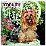 Yorkshire Terriers 2019 Calendar