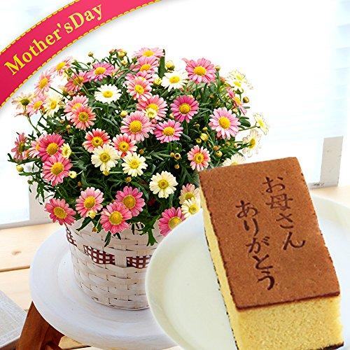 母の日 マーガレット ( いちごみるく ) カステラ 花とスイ...