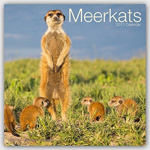 Meerkats Calendar 2017 (Square)