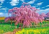 1000ピース ジグソーパズル 満開の三春滝桜(49x72cm)