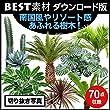 【BEST素材】南国風やリゾート感あふれる樹木! (Mac)|ダウンロード版