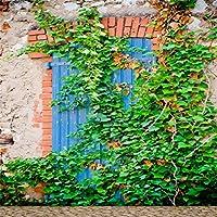 csfoto 5x 5ft背景for Overgrownブルードアwith Ivy Old Stone壁写真バックドロップ破棄され忘れ鮮やかなアイビーグリーンプラント風化Aged壁フォトスタジオ小道具ビニール壁紙