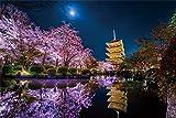 1000ピース ジグソーパズル KAGAYA 月に咲く(京都) 【光るパズル】(50x75cm)