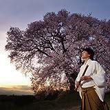 季(TOKI)~春~ 画像