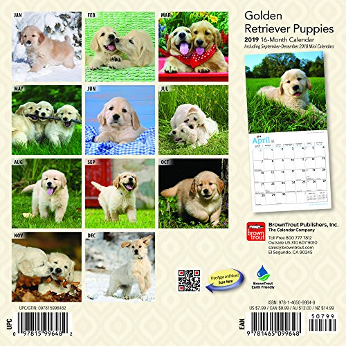 『Golden Retriever Puppies 2019 Calendar』の1枚目の画像