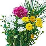 お正月用お供え菊ミックス植えタイプ2(寒歌姫入り)4号 2ポットセット[この1ポットでお正月用のお供え菊1対が栽培できます!]