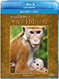 ディズニーネイチャー/サルの王国とその掟 ブルーレイ+DVDセット[Blu-ray/ブルーレイ]