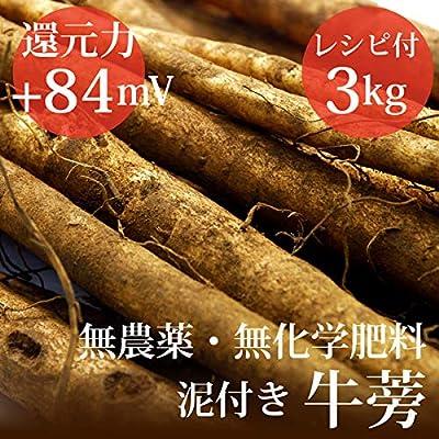 泥付き牛蒡3kg 千葉県産 無農薬・無化学肥料・還元力(抗酸化力)ORP+84mV