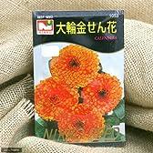 【種子】大輪キンセンカ [1053]