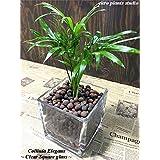 送料無料 テーブルヤシ 観葉植物 鉢植え 陶器 インテリア 北欧 ギフト お祝い おしゃれ モダンスクエアグラス