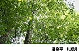 シンフォレストDVD 森林浴サラウンド 「新緑の森」スペシャル 画像