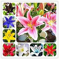 ミックス:ユリの種レアリリウムブラウニーの花の庭の植物は家庭菜園のための空気盆栽ポット植物を浄化することができます50個